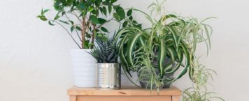 5 Plants To Keep In Your Bedroom For Better Health